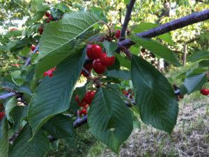 Agriturismo Attulaio | Vicchio | Mugello | Toscana | Italia | Agriturismo Vicchio